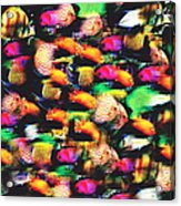Fish And Fishes Acrylic Print