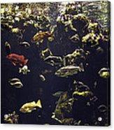 Fish Aquarium Acrylic Print