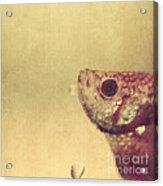 Fish Can Be Sad Too Acrylic Print