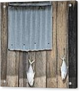 Fish Drying Outside Fisherman House Acrylic Print
