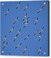 Fish Fear Us Acrylic Print