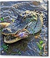 Fish For Dinner  Acrylic Print