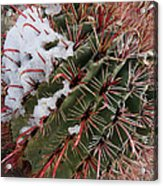 Fish Hook Barrel Cactus With Snow Acrylic Print by Susan  Degginger