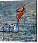 Fish In Acrylic Print