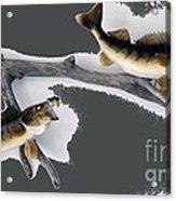 Fish Mount Set 06 B Acrylic Print