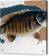 Fish Mount Set 10 Cc Acrylic Print