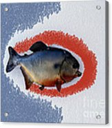 Fish Mount Set 12 B Acrylic Print