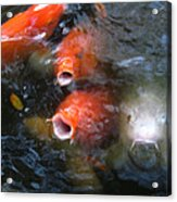 Fish Mouths 2 Acrylic Print