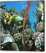Fish - National Aquarium In Baltimore Md - 121232 Acrylic Print by DC Photographer