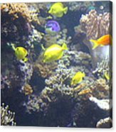 Fish - National Aquarium In Baltimore Md - 121246 Acrylic Print by DC Photographer