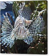 Fish - National Aquarium In Baltimore Md - 121266 Acrylic Print by DC Photographer