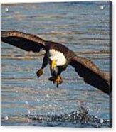 Fish On The Go  Acrylic Print by Glenn Lawrence