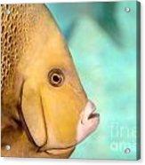 Fish Profile Acrylic Print