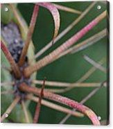 Fishhook Barrel Cactus Spines Acrylic Print
