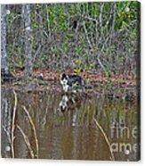Fishing Feline Acrylic Print by Al Powell Photography USA