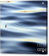 Fishing Float  Acrylic Print