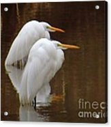 Fishing In Muddy Waters Acrylic Print