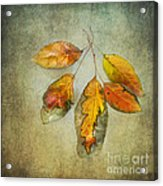 Five Autumn Leaves Acrylic Print
