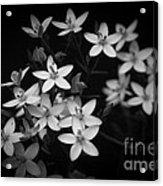 Five Petals Acrylic Print