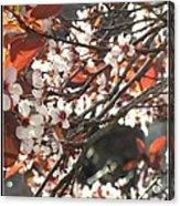 Five Petals - Spring Blossoms Acrylic Print