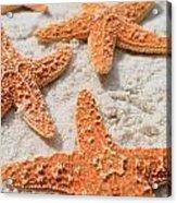 Five Starfish Acrylic Print