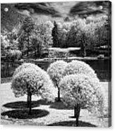 Five Trees Acrylic Print