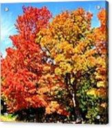 Flamboyant Autumn Acrylic Print