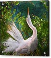 Flamboyant Egret Acrylic Print