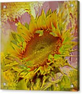 Flame Flower Acrylic Print