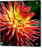 Flame Tips Acrylic Print