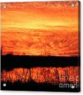 Flamed Sunset Acrylic Print