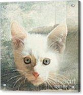 Flamepoint Siamese Kitten Acrylic Print