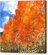 Flaming Aspens Acrylic Print