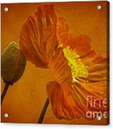 Flaming Beauty Acrylic Print by Heiko Koehrer-Wagner