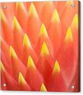 Flaming Bromeliad  Acrylic Print