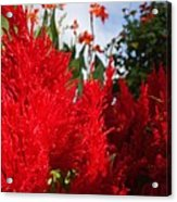 Flaming Feathered Flower Power Acrylic Print