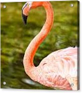 Flaming Flamingo Acrylic Print
