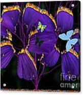 Flaming Flowers Acrylic Print by Bobby Hammerstone