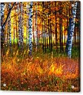 Flaming Grass Acrylic Print