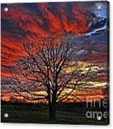 Flaming Oak Sunrise Acrylic Print