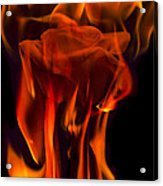 Flaming Rose Acrylic Print