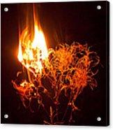 Flaming Seedheads Acrylic Print