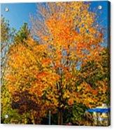 Flaming Acrylic Print