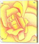 Flaming Yellow Rose Acrylic Print