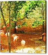 Flamingo 1 Acrylic Print