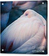 Flamingo 1b - Square Acrylic Print