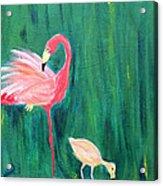 Flamingo And Chick Acrylic Print