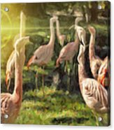 Flamingo Art Acrylic Print