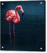 Flamingo - Blue Acrylic Print