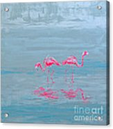 Flamingo Couple In Shallow Waters Acrylic Print